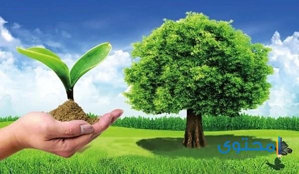 أثار التفاعلات الكيميائية على البيئة