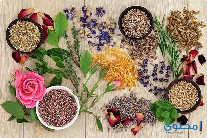 أسماء الأعشاب الطبية في المغرب