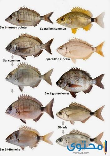 أسماء بعض أنواع الأسماك