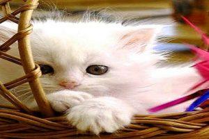 أغلفة وكفرات قطط للفيس بوك وتويتر