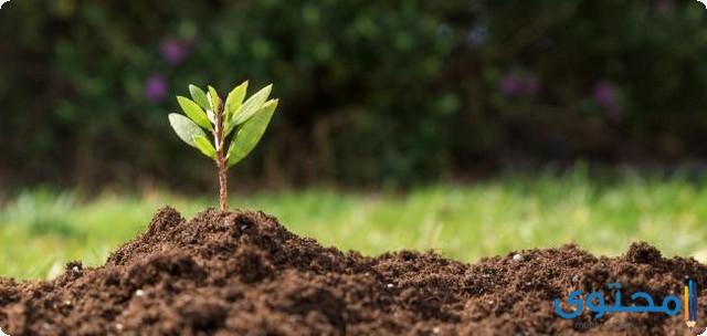 إحياء عن خلايا النبات وأنسجته