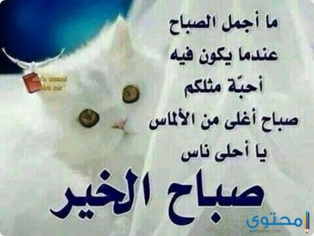 اشعار صباح الخير