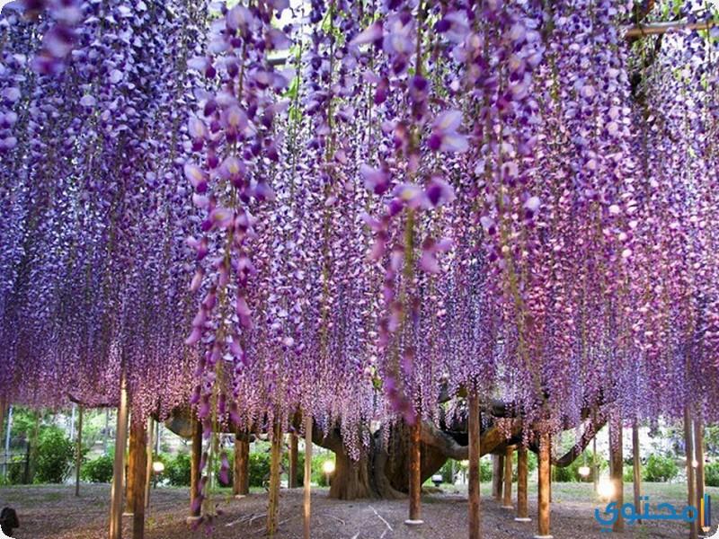 حديقة اشيجكاغا
