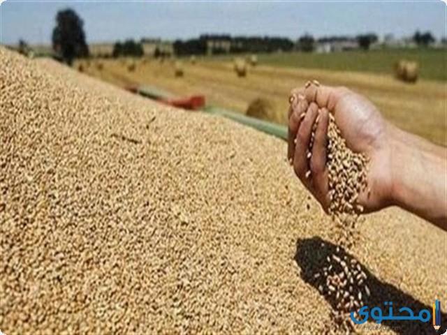 اكثر المنتجات استيراداً في مصر 2022