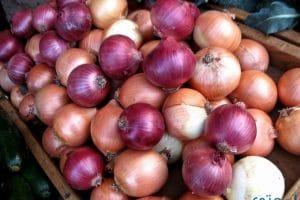 فوائد البصل وأهمتة للشعر والبشرة والجنس