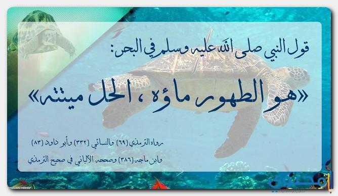 حكم أكل التمساح في الإسلام موقع محتوى