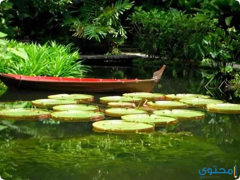حديقة التوابل فى بينانج