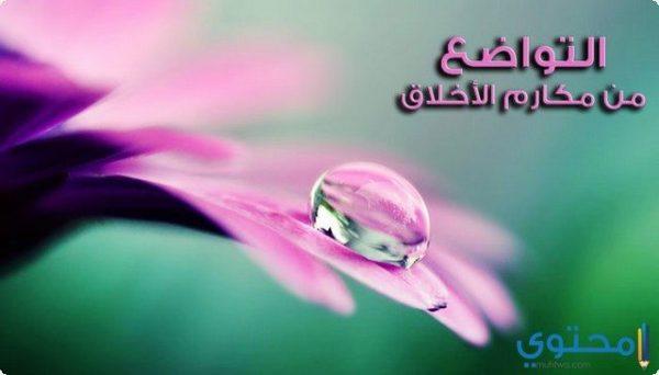 التواضع في الاسلام