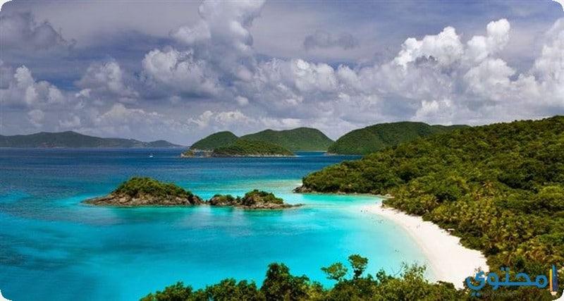 شاطئ خليج الجذع