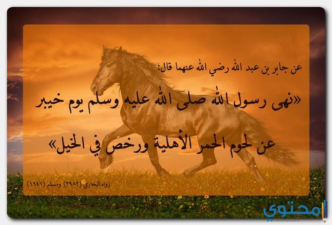 حكم أكل الحصان