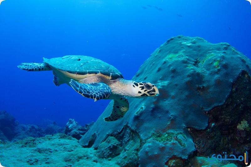 جزيرة السلاحف فى ساندوكان