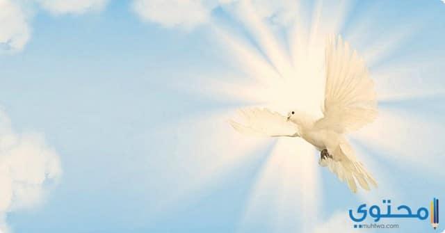 السلام