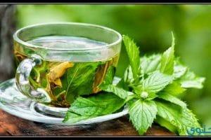 فوائد مشروب الشاي الأخضر بالنعناع لصحة الجسم