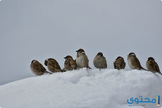 احتياطات فصل الشتاء