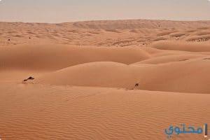 موضوع تعبير عن تعمير الصحراء في سيناء والوادي