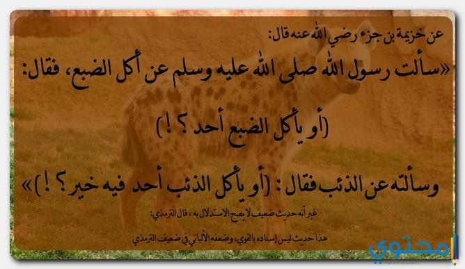 الضباع في الشريعة الإسلامية