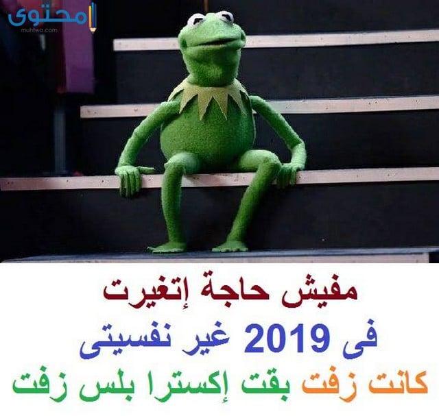 كيرمت الضفدع 2019