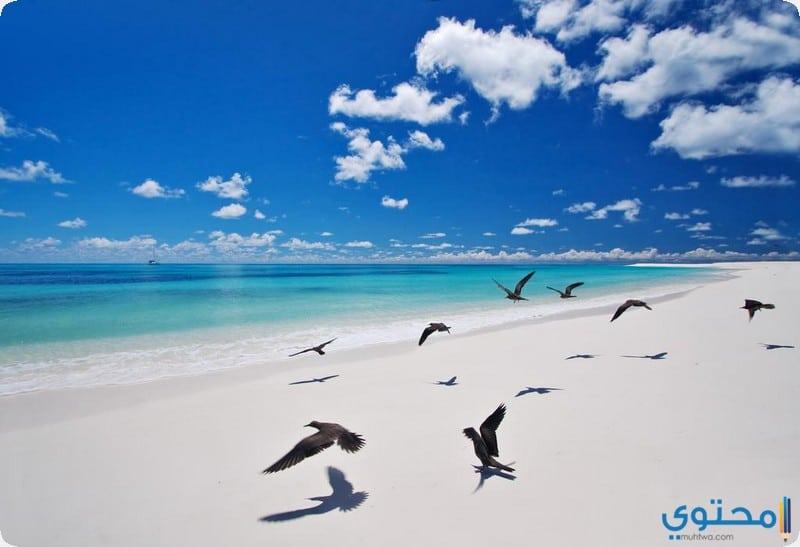 جزيرة الطيور لودج