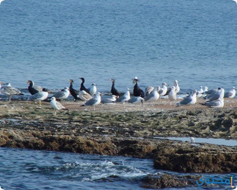 جزيرة العباس