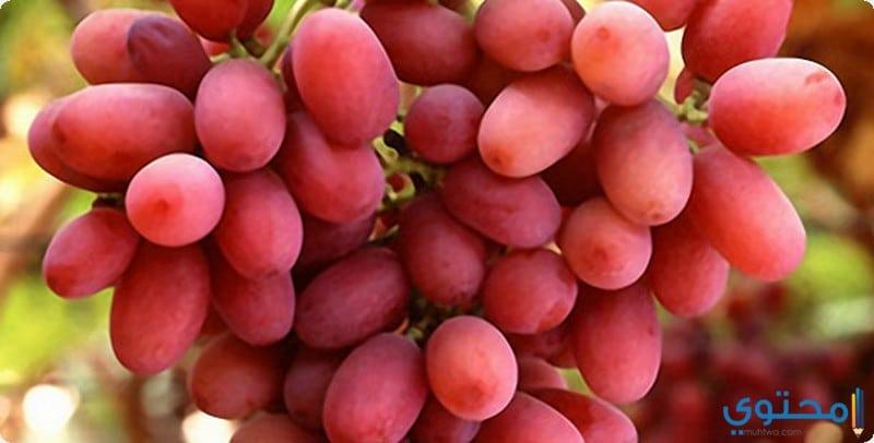 القيمة الغذائية للعنب الاحمر