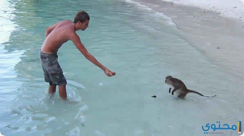 شاطيء القرود