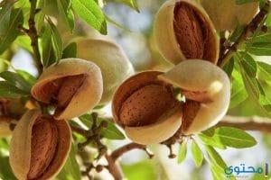 فوائد اللوز للبشرة والشعر والصحة