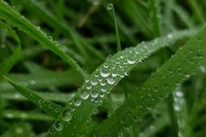 موضوع تعبير عن المطر