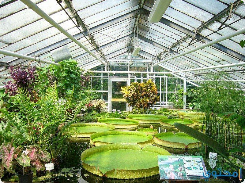 حدائق النباتات الوطنية في دبلن