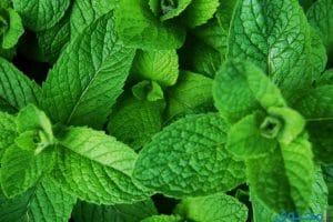 فوائد النعناع للبشرة والشعر والصحة العامة