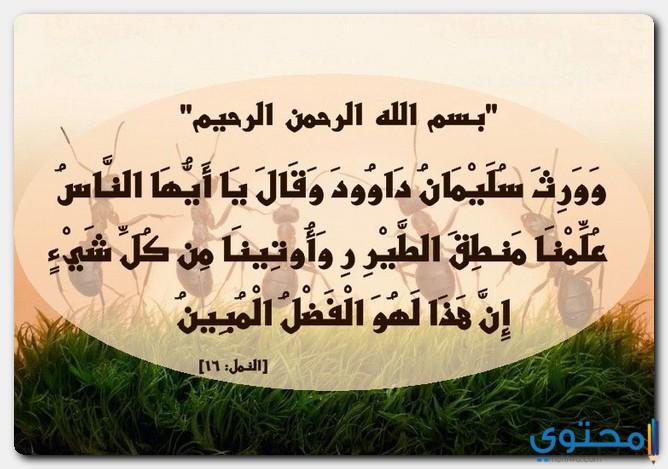 النملة في الشريعة الإسلامية