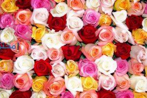 تفسير رؤية الأزهار والورود فى المنام
