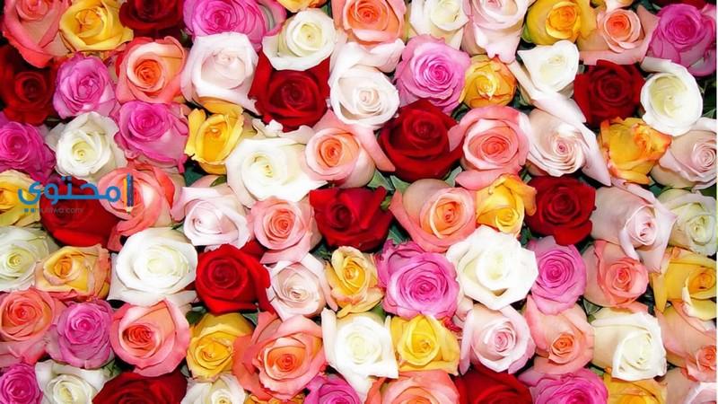 تفسير رؤية الأزهار والورود فى المنام موقع محتوى