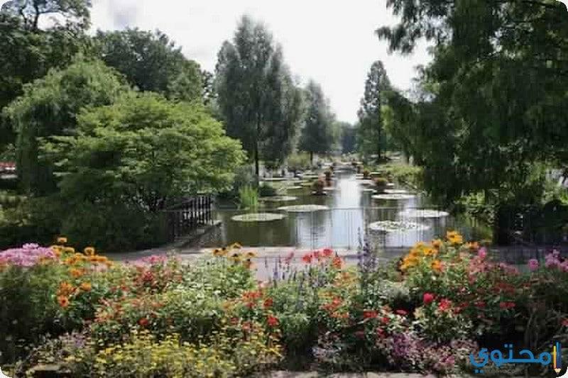 الحديقة اليابانية