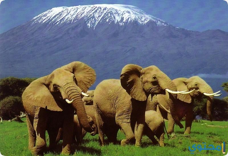 محمية أمبوسيلي الوطنية