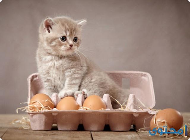 أنواع أكل القطط الصغيرة
