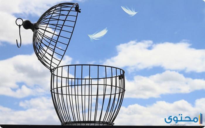 بحث عن أهمية الحرية للإنسان