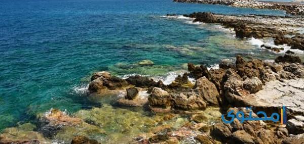 بحث عن البيئة الساحلية