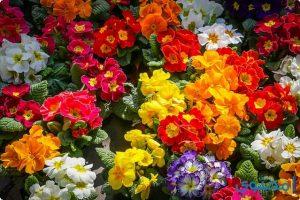 بحث عن فصل الربيع جديد