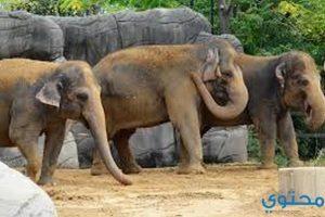 بحث عن زيارة لحديقة الحيوانات