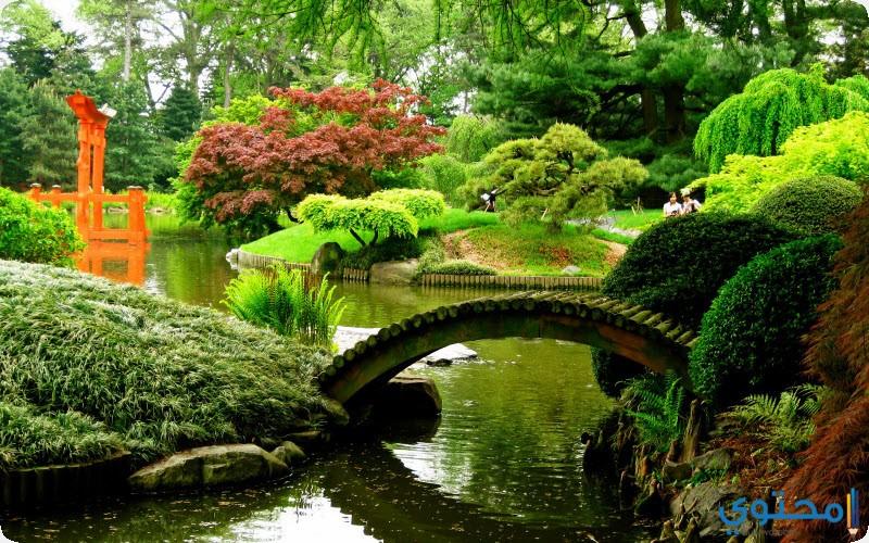 حديقة بروكلين النباتية