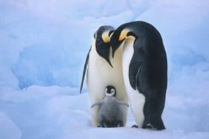 تفسير رؤية البطريق فى المنام بالتفصيل