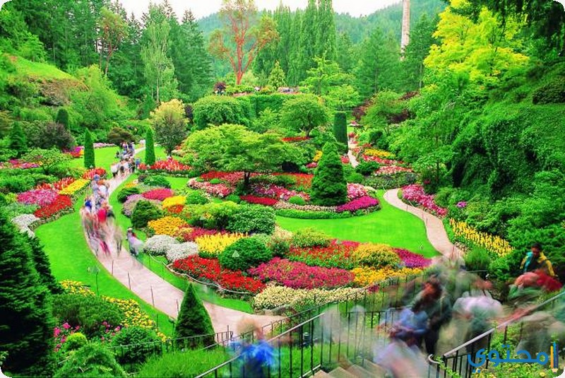 حدائق بوتشارت كندا