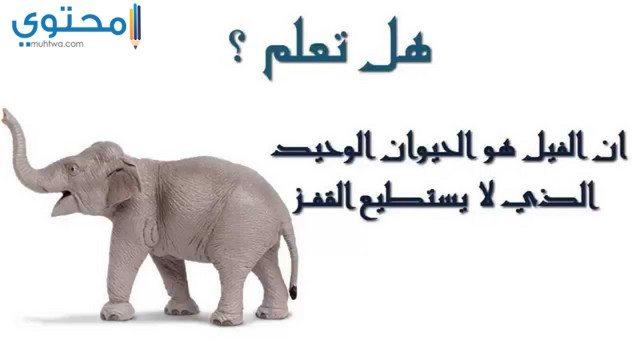 بوستات ثقافية عن الحيوان