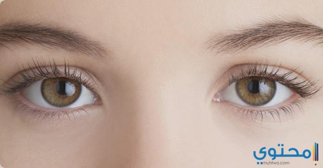 دواعي استخدام قطرة عين بوكسينات