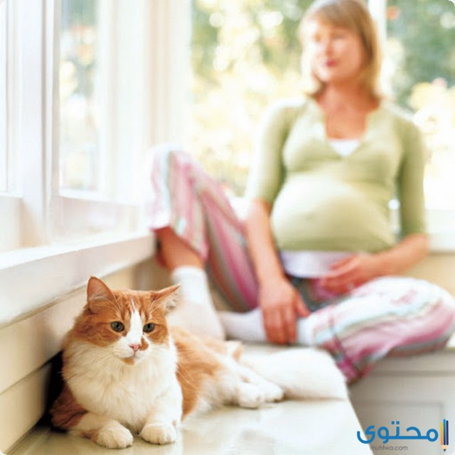 الحيوانات الأليفة على الحمل