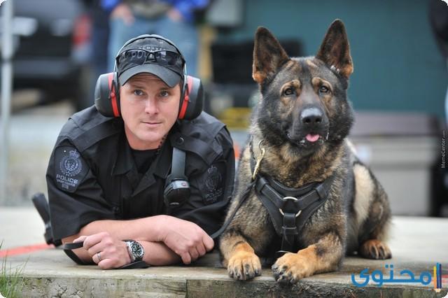 تدريب الكلاب البوليسية على المخدرات