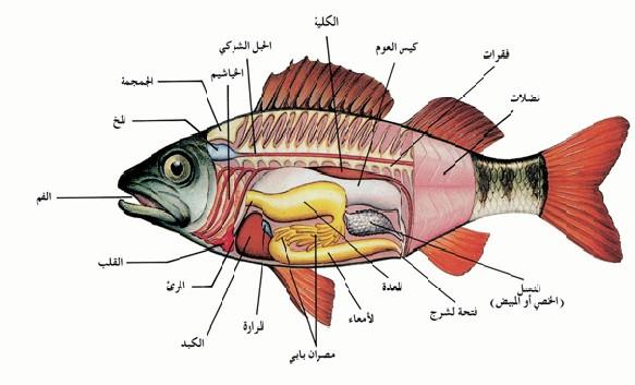 بحث عن الاسماك والبرمائيات