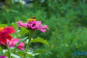 تعبير عن الحدائق والزهور