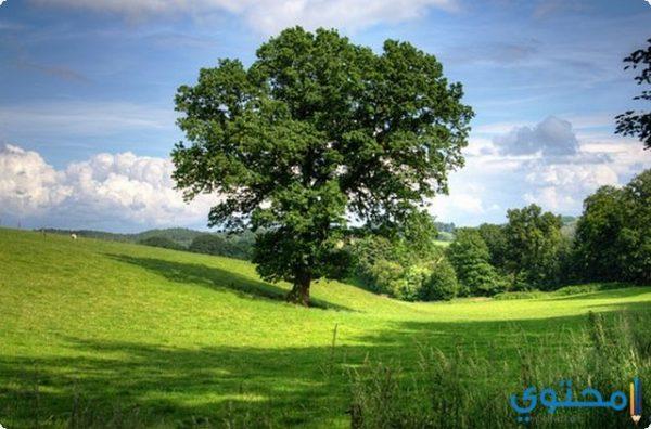 وصف جميل عن الريف