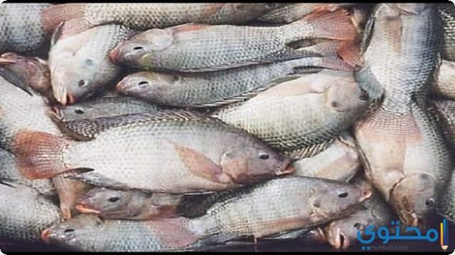 تفسير حلم السمك في المنام